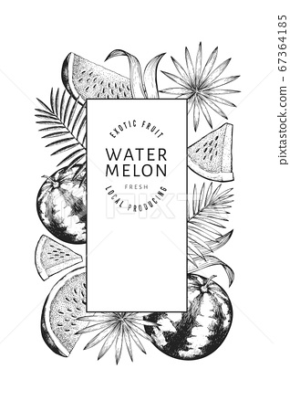Watermelons, melons and tropical leaves design 67364185