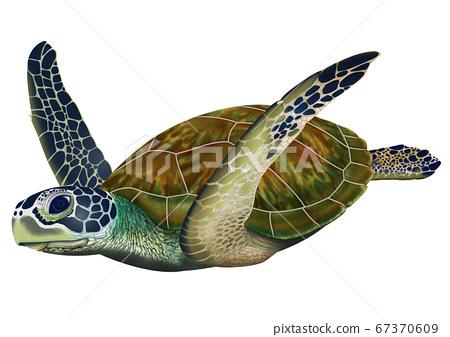 海龜 67370609