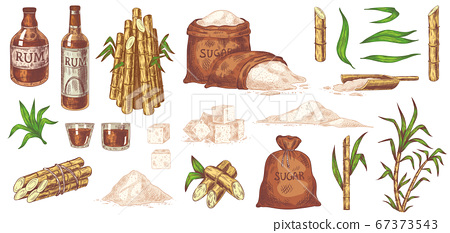 Hand drawn sugarcane and rum. Stalks and leaves plants sugarcane, sugar sack and cubes, glass and bottle of rum vintage sketch vector set 67373543