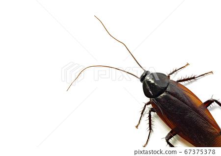 蟑螂(深度合成) 67375378