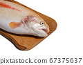 Raw fresh whole Gold Rainbow trout on cutting 67375637