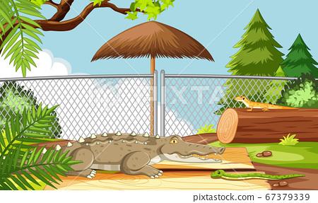 Alligator in the zoo scene 67379339