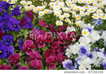 봄의 꽃밭 67380166