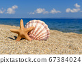 Seashells on the sand by the sea on a sunny day 67384024