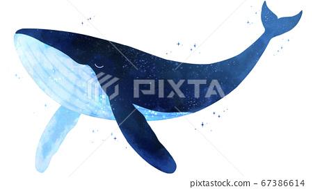 夜空中的鯨魚 67386614
