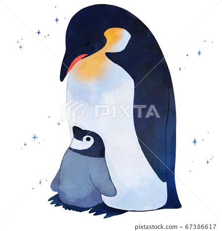 帝企鵝父母和孩子 67386617