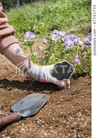 Gardening concept- gardening tools and flowers in the garden 092 67391734