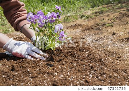 Gardening concept- gardening tools and flowers in the garden 107 67391736