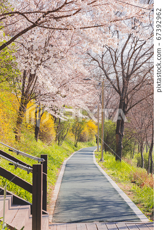 Spring flowers concept, beautiful nature scene with blooming tree 108 67392962