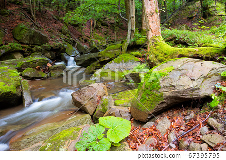 water stream among the rocks in the forest. summer 67395795