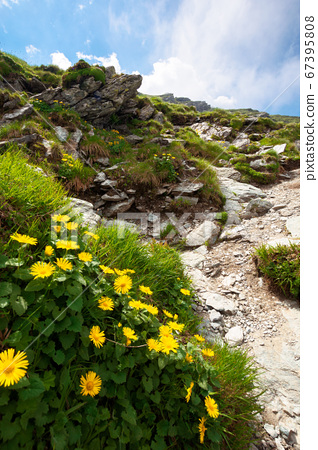 flowers on the rocky path uphill. summer nature 67395808