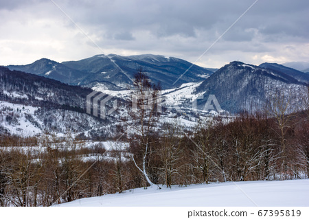 cloudy winter morning in mountains. tree on snow 67395819