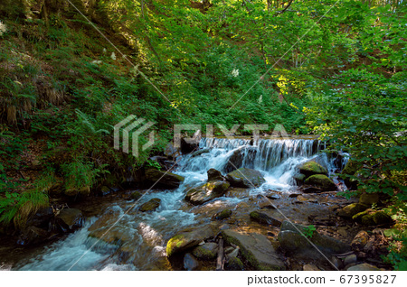 mountain river in the forest. fresh water stream 67395827