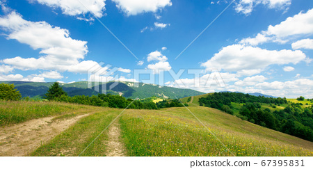 path through the meadow in mountains. sunny summer 67395831