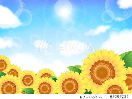 Sunflower blue sky background summer 67397282