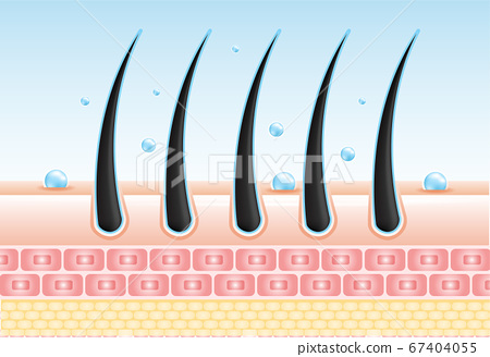 Hair care serum follicle diagnostics. Anatomy skin, medical human, epidermis layer, vector illustration design. 67404055