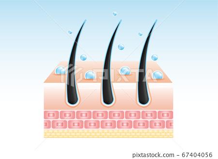 Hair care serum follicle diagnostics. Anatomy skin, medical human, epidermis layer, vector illustration design. 67404056