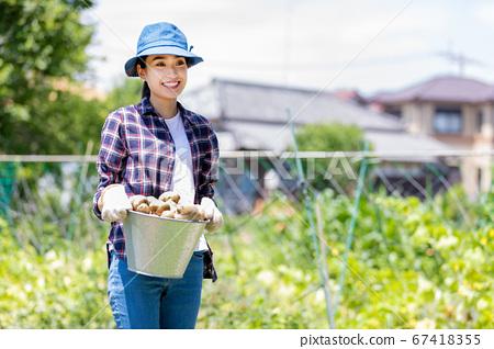 女人收穫土豆 67418355