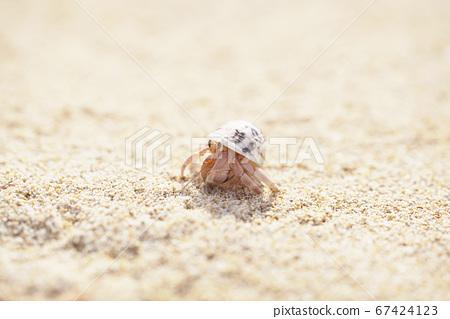 可愛的沙灘 67424123