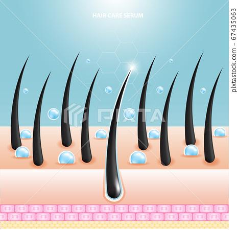 Hair care serum follicle diagnostics. Anatomy skin, medical human, epidermis layer, vector illustration design. 67435063