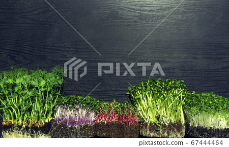 microgreens sprouts on wooden background 67444464