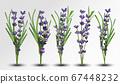 3D realistic fragrant bunch lavender. Bunch beautiful lavender on transparent background. Tender violet lavender. Big collection flower lavender with green leaf. Vector illustration 67448232