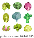Different Cabbage with Broccoli and Pak Choi Vector Set 67449385
