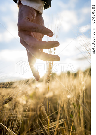 Businessman or environmentalist reaching down with 67450081