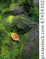 나무 뿌리에 떨어지는 낙엽 67454302