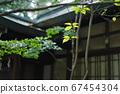 경내에 심어진 나무의 잎 67454304