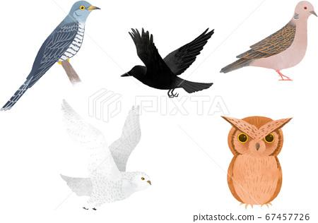 可愛的小鳥2 67457726