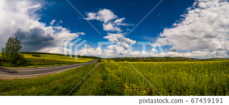Spring rapeseed yellow blooming fields 67459191