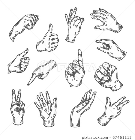 Hand gesture sketch. Vector illustration isolated on white Arm sketched. Thumb up, victory, peace doodle line set Drawing of hands 67461113
