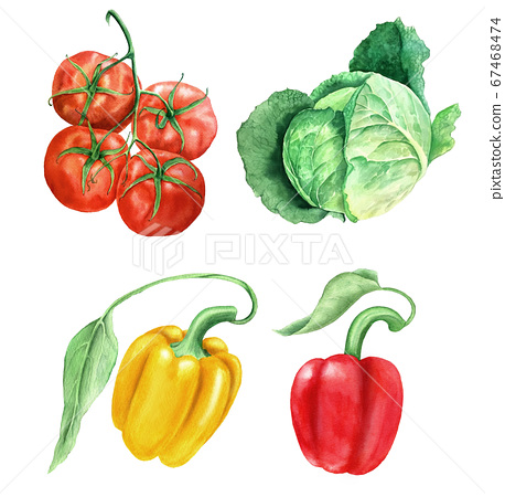 Set of vegetables vintage watercolor botanical illustration 67468474