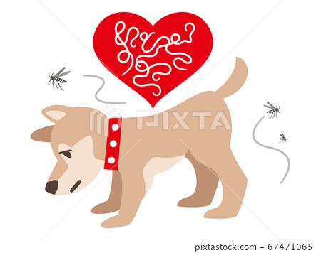 狗和蚊子感染了絲蟲 67471065