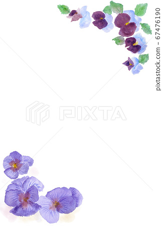 Watercolor pansy illustration postcard 67476190
