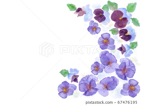 Pansy frame border illustration painted by watercolor 67476195