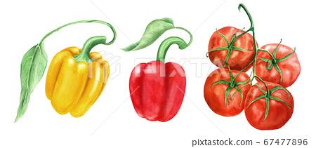 Set of vegetables vintage watercolor botanical illustration 67477896