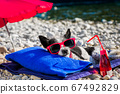 dog siesta on towel with umbrella and cocktail 67492829