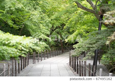 나가오카 쿄시의 신록의 코우 묘지 67495162
