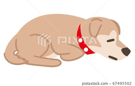 由於身體狀況不佳而蹲下的狗 67495502
