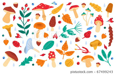 Fall botanical decor. Autumn doodle forest leaves, flowers, berries and mushrooms, botany fall season collection vector illustration icons set 67499243