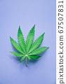 Cannabis leaf, marijuana leaf 67507831