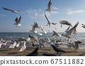 Seagulls and pigeons on the seashore on the beach on a sunny spring day. 67511882
