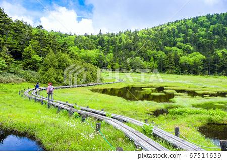 Shichihachiike marsh hike in early summer 67514639