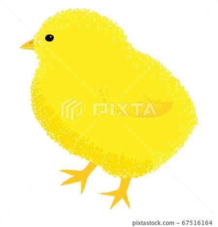 可愛的小雞圖(矢量,白色背景,摳圖) 67516164