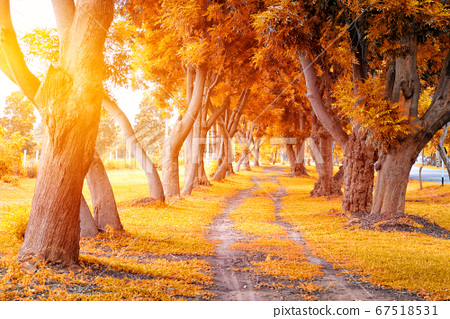 Beautiful Autumn Park in Sunny Day 67518531