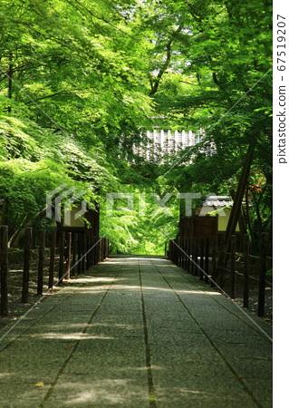 코우 묘지 단풍 나무의 참배 길 67519207