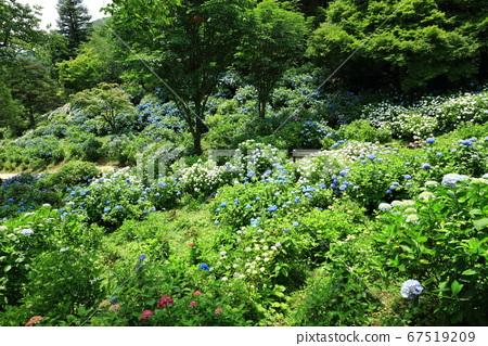 마이즈 루 자연 문화원 수국 정원 풍경 67519209