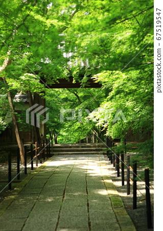 코우 묘지 단풍 나무의 참배 길 67519547